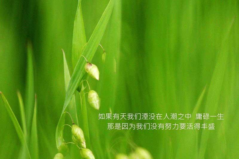 云南高考改革将于2019年秋